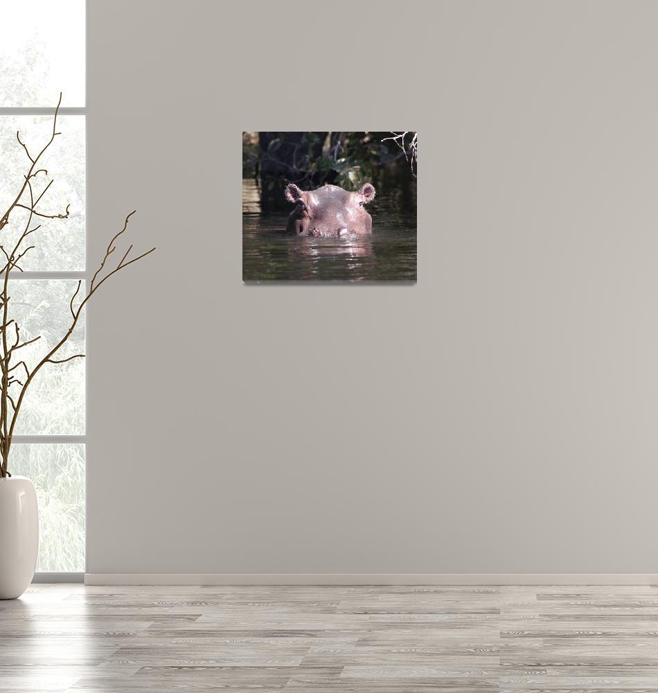 """""""Hippopotamus Watching""""  (2016) by poleyland"""