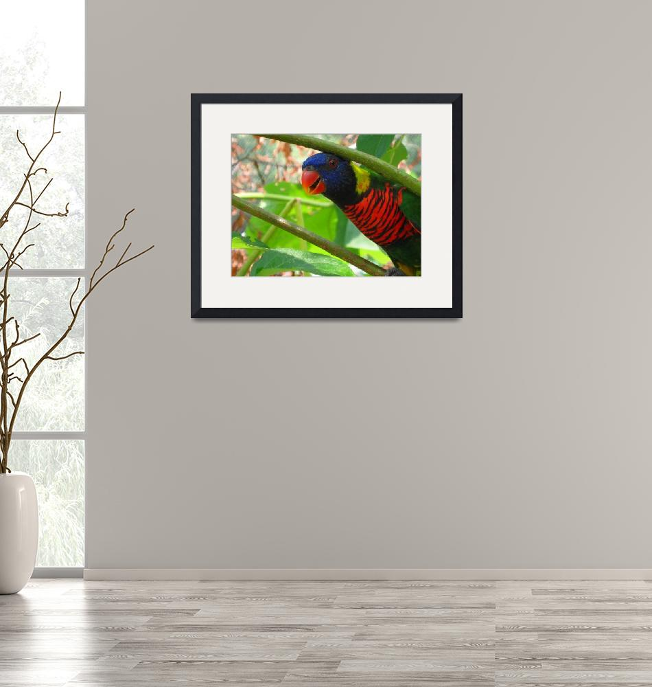 """""""Curious Parrot""""  (2012) by kenrainwaterphotography"""