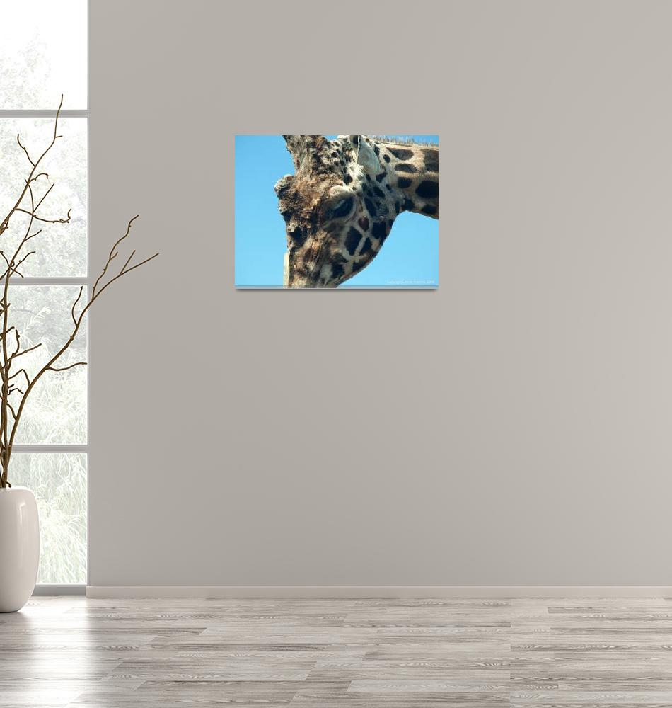 """Giraffe""  (2009) by leonieroberts"