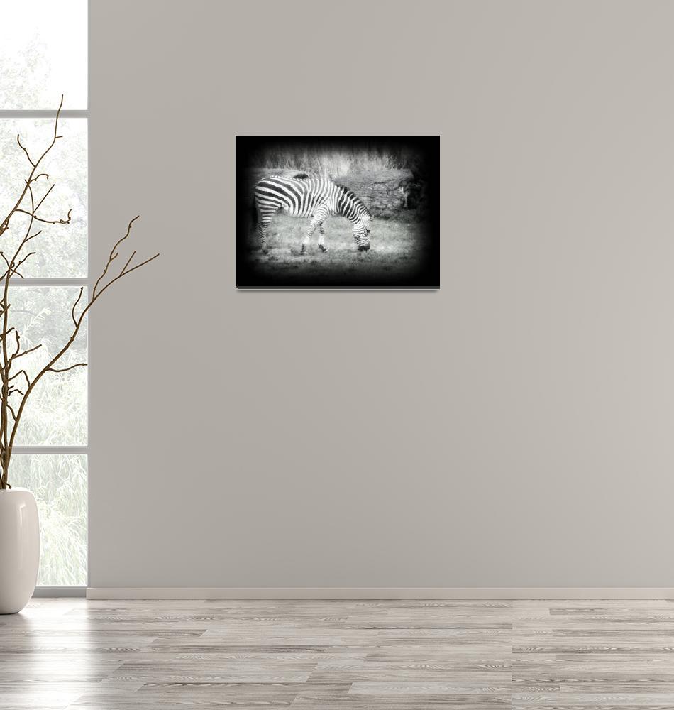 """zebra""  (2008) by Risforrobo"