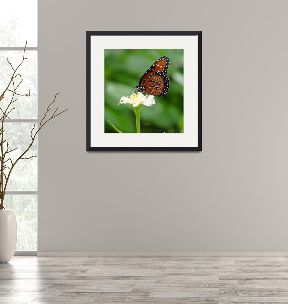 """""""Queen Butterfly""""  (2012) by WildAboutNaturePhotography"""