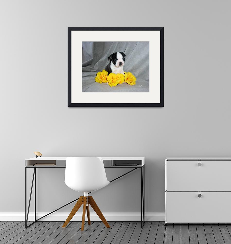 """""""Boston Terrier Puppy With Yellow Roses""""  (2004) by ACuteProduction"""