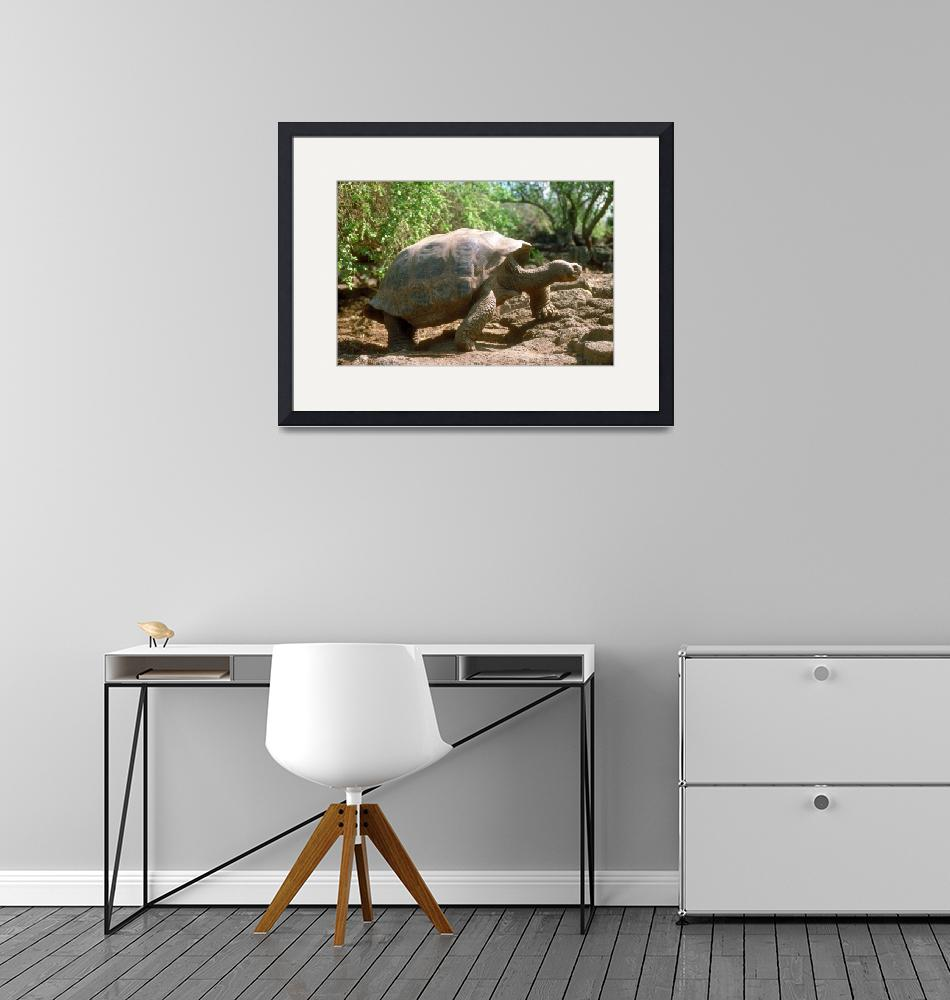"""""""Endangered Galapagos Giant Tortoise"""" by ArtLoversOnline"""
