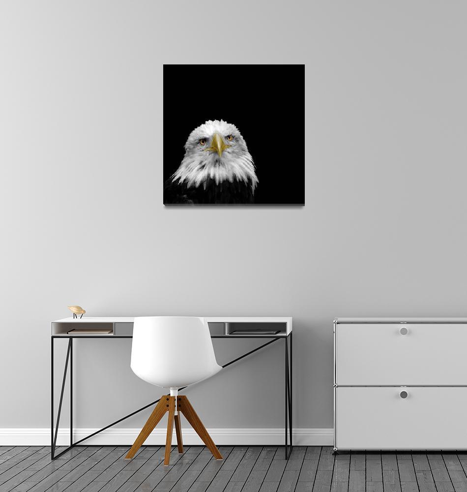 """Bald Eagle""  by mark-rogan"