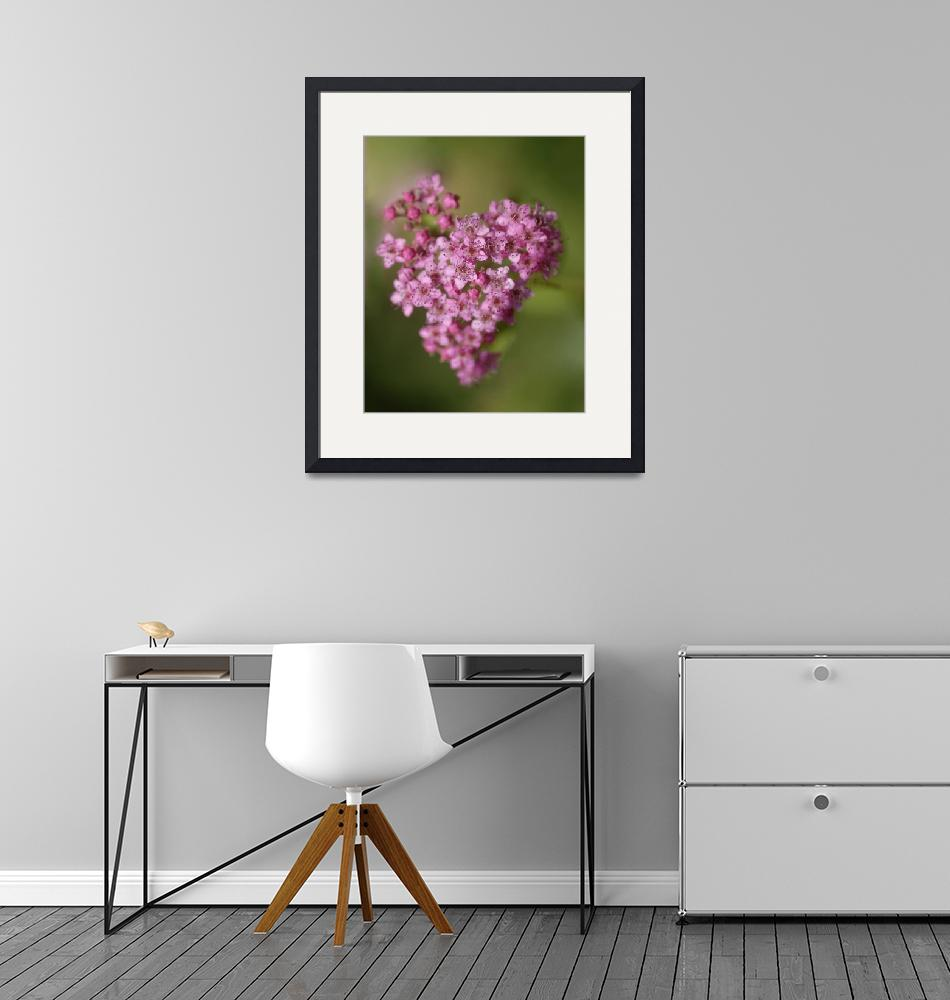 """""""Heart Flower""""  (2012) by Clearycreativephoto"""
