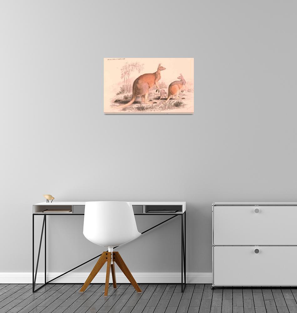 """Vintage Kangaroo Family Illustration (1849)""  by Alleycatshirts"