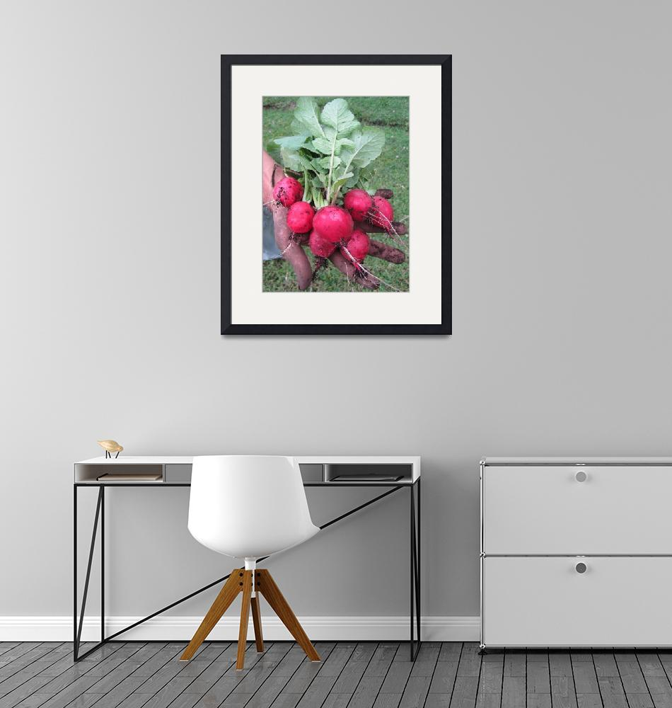 """""""Fresh Harvested Beets""""  (2010) by ShinePhotos"""