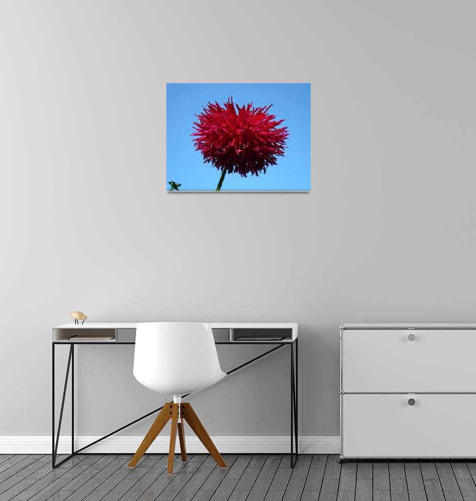 """DAHLIA FLOWER Red Purple Dahlias Art Prints""  (2009) by BasleeTroutman"