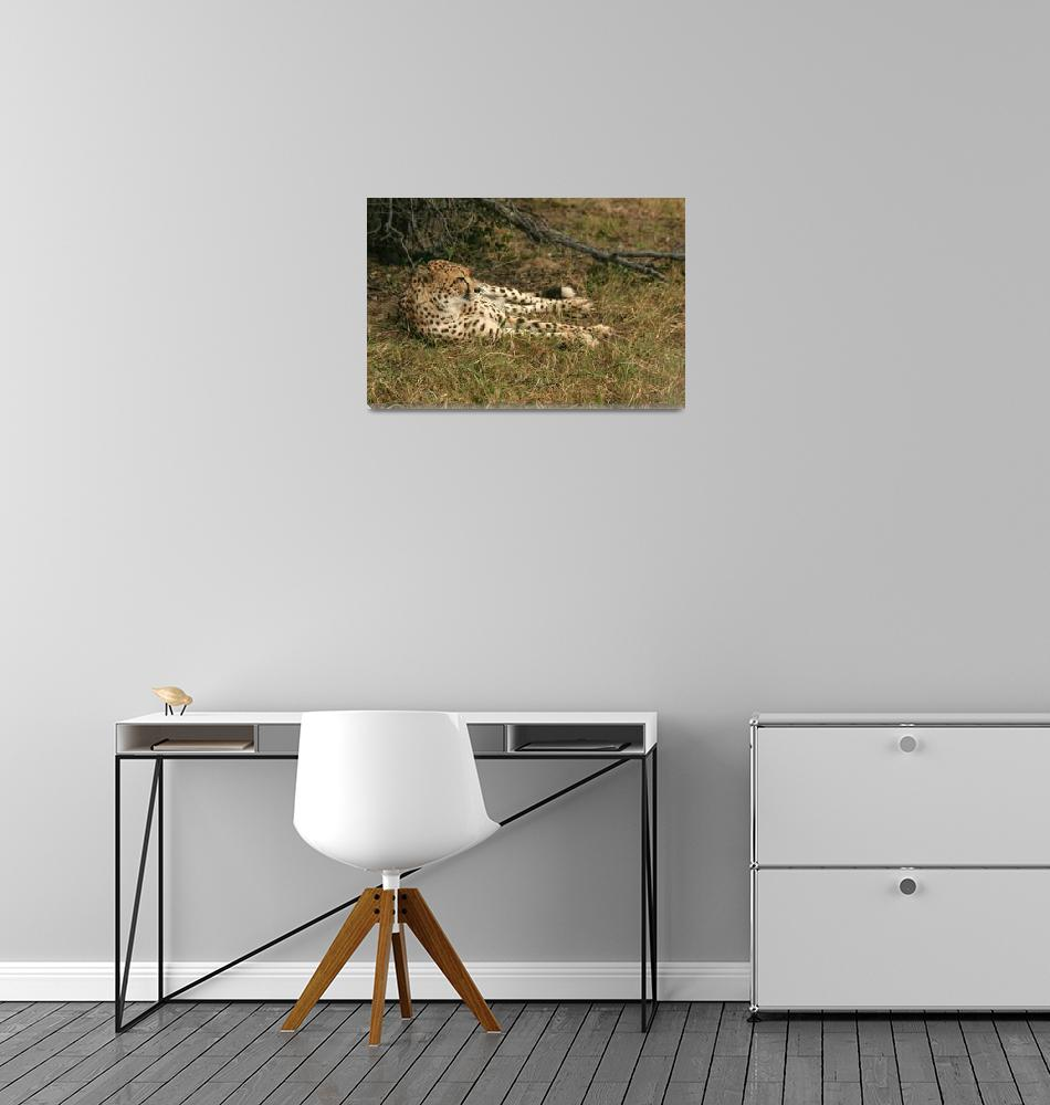 """Resting Cheetah""  by KarenZukRosenblatt"