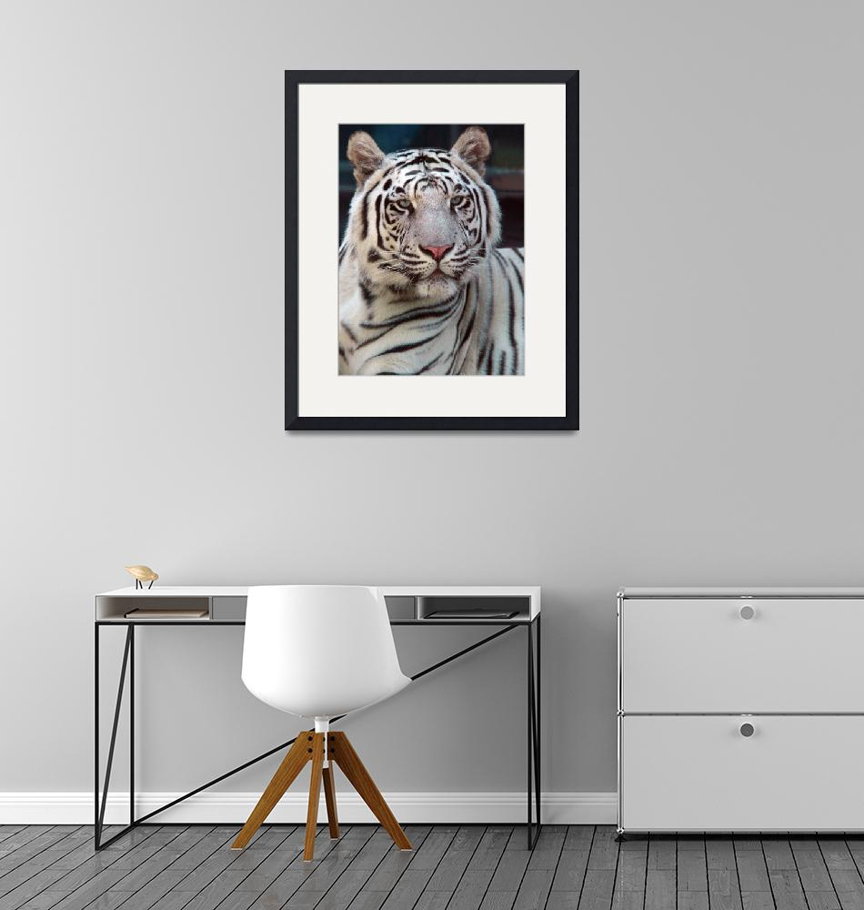 """""""Eye of the Tiger"""" (2009) by JohnGaffen"""