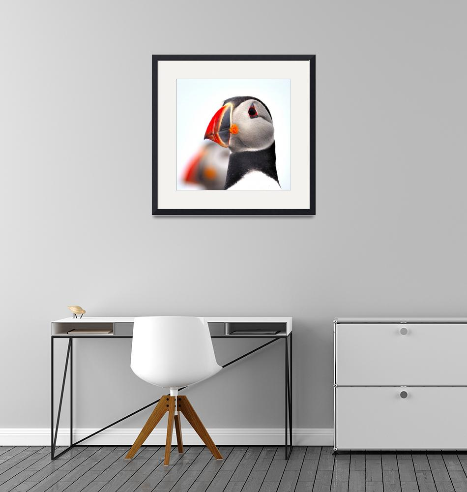 """""""Puffin Close Up""""  (2005) by JoaoPonces"""