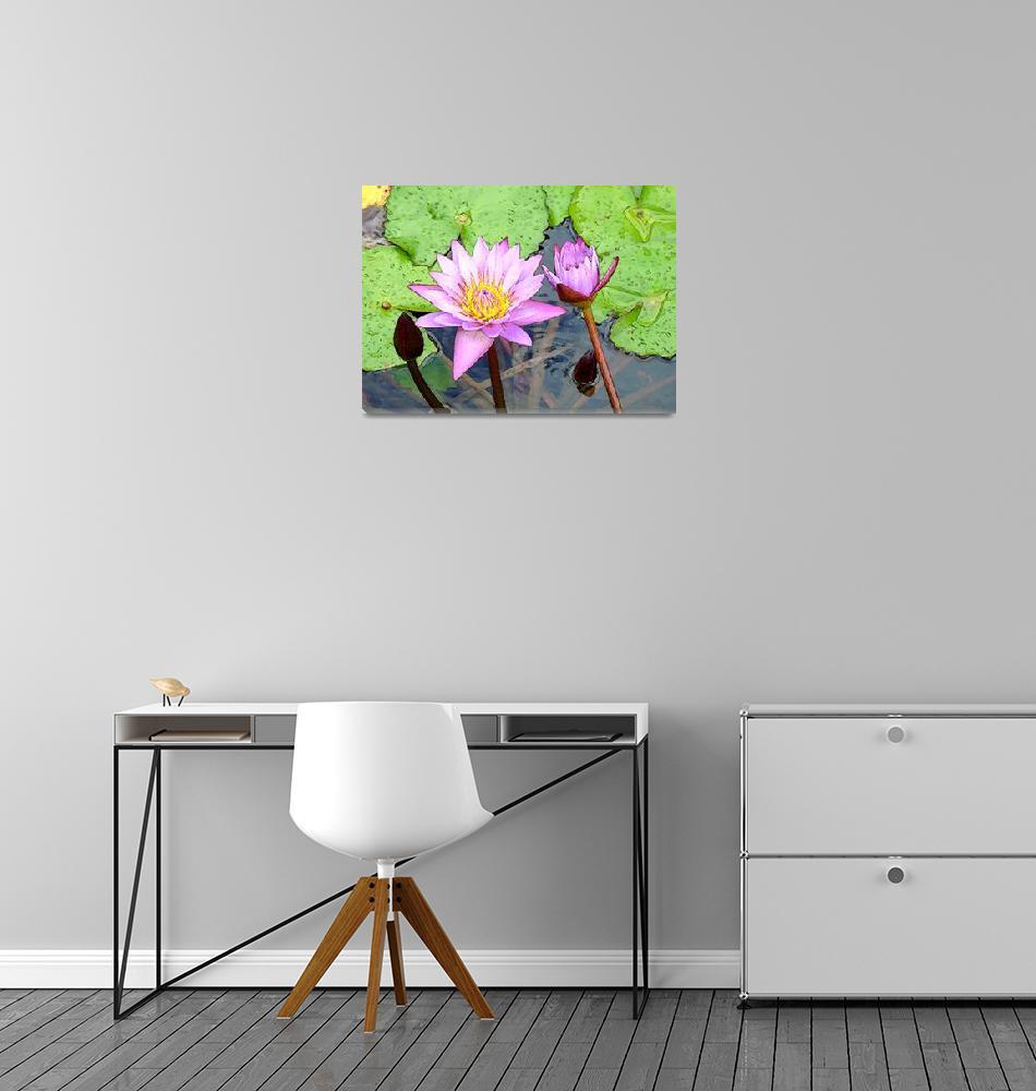 """Opening Flower Lilas""  (2010) by Caribbean-Digital-Art"
