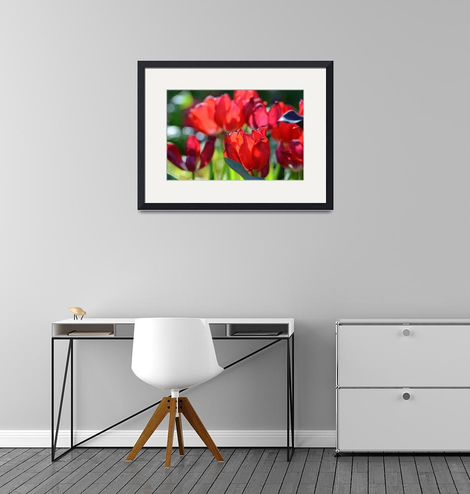 """""""Red Tulips"""" by JennyWalters"""