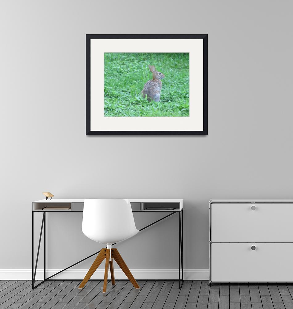 """Cottontail Rabbit""  (2015) by Applesoft"