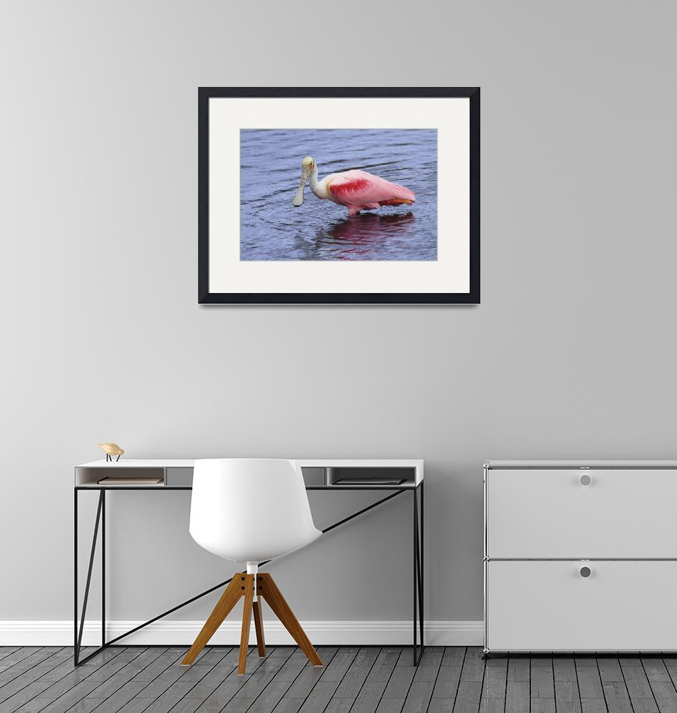 """""""Roseate Spoonbill Photograph""""  by ArtLoversOnline"""