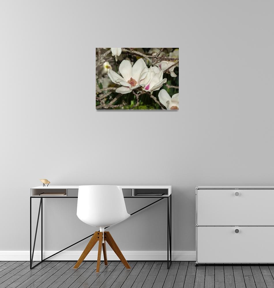 """Magnolia Blossoms""  (2019) by GlennFrancoSimmons"