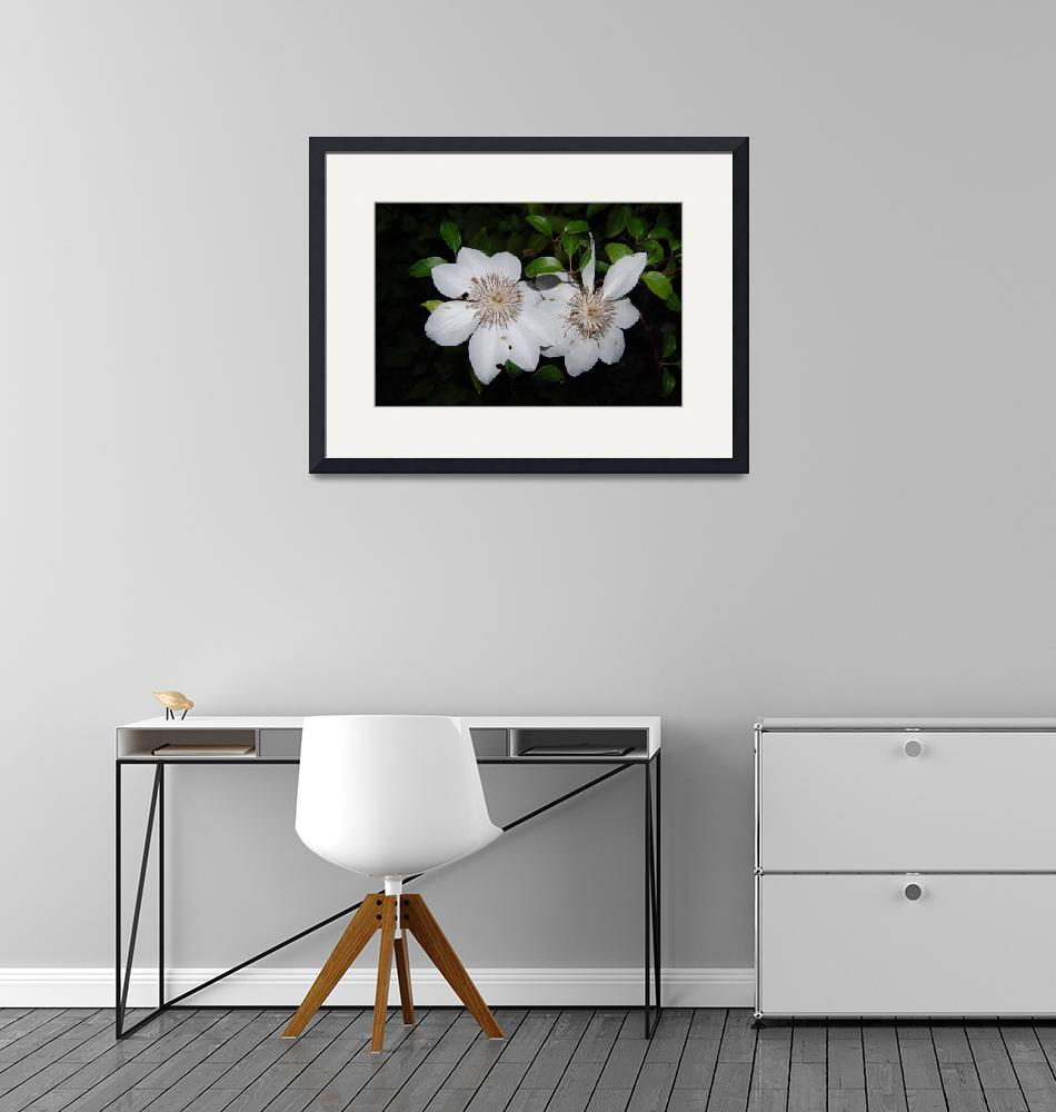 """""""floral white clematis""""  by sherryswest"""