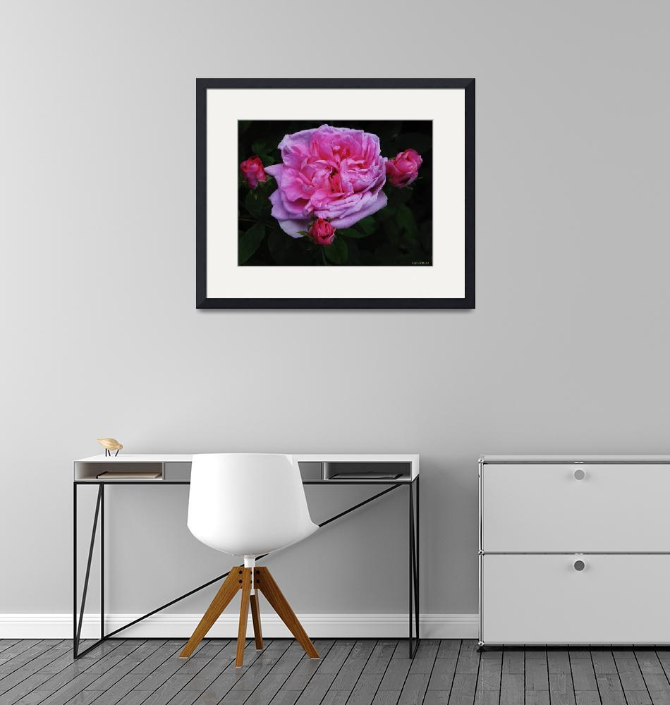 """""""Pink Rose With Three Buds""""  by TheCandidImage"""