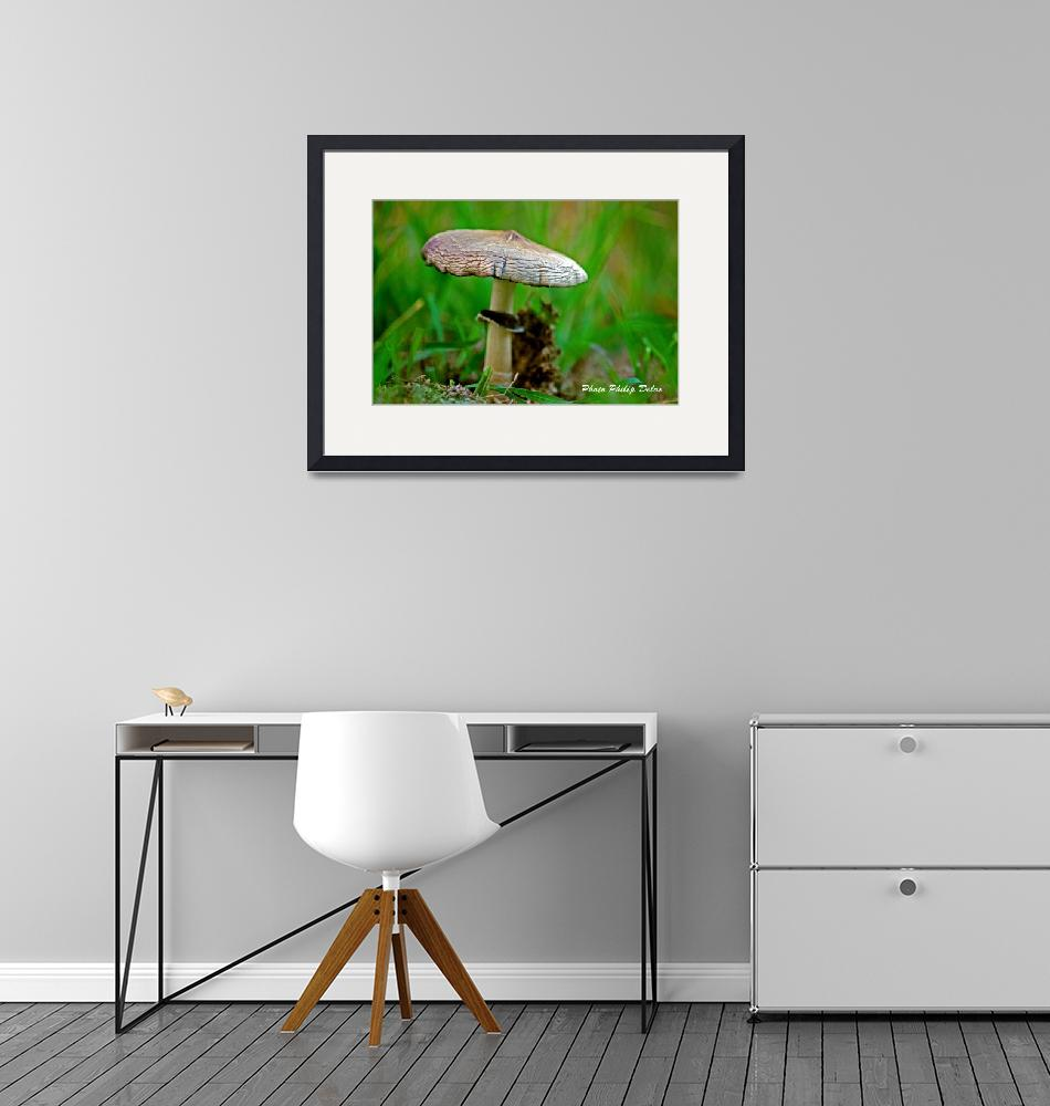 """""""DUNG MUSHROOM IN GUADELOUPE""""  (2008) by PhilipDelos"""