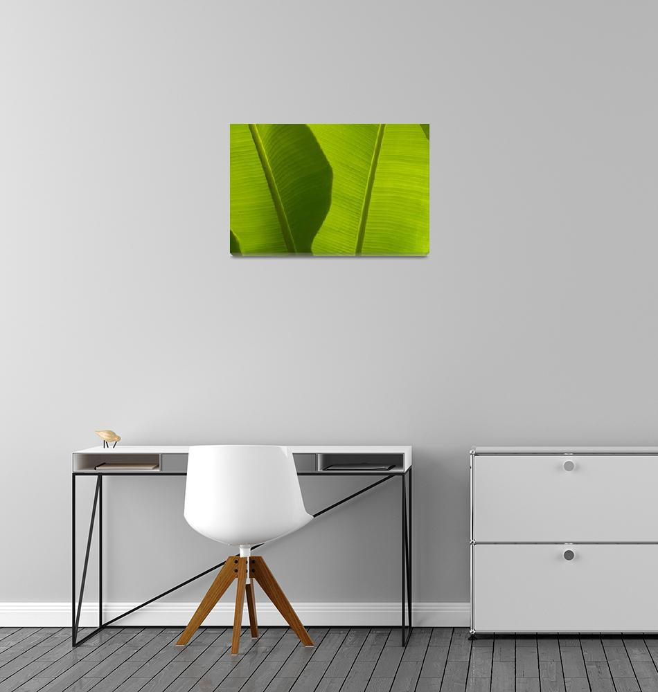 """Banana Leaves Detail, Close-Up""  by DesignPics"
