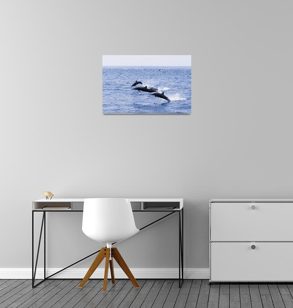 """Guatemala, Puerto Quetzal, Spinner Dolphins Jumpin""  by DesignPics"
