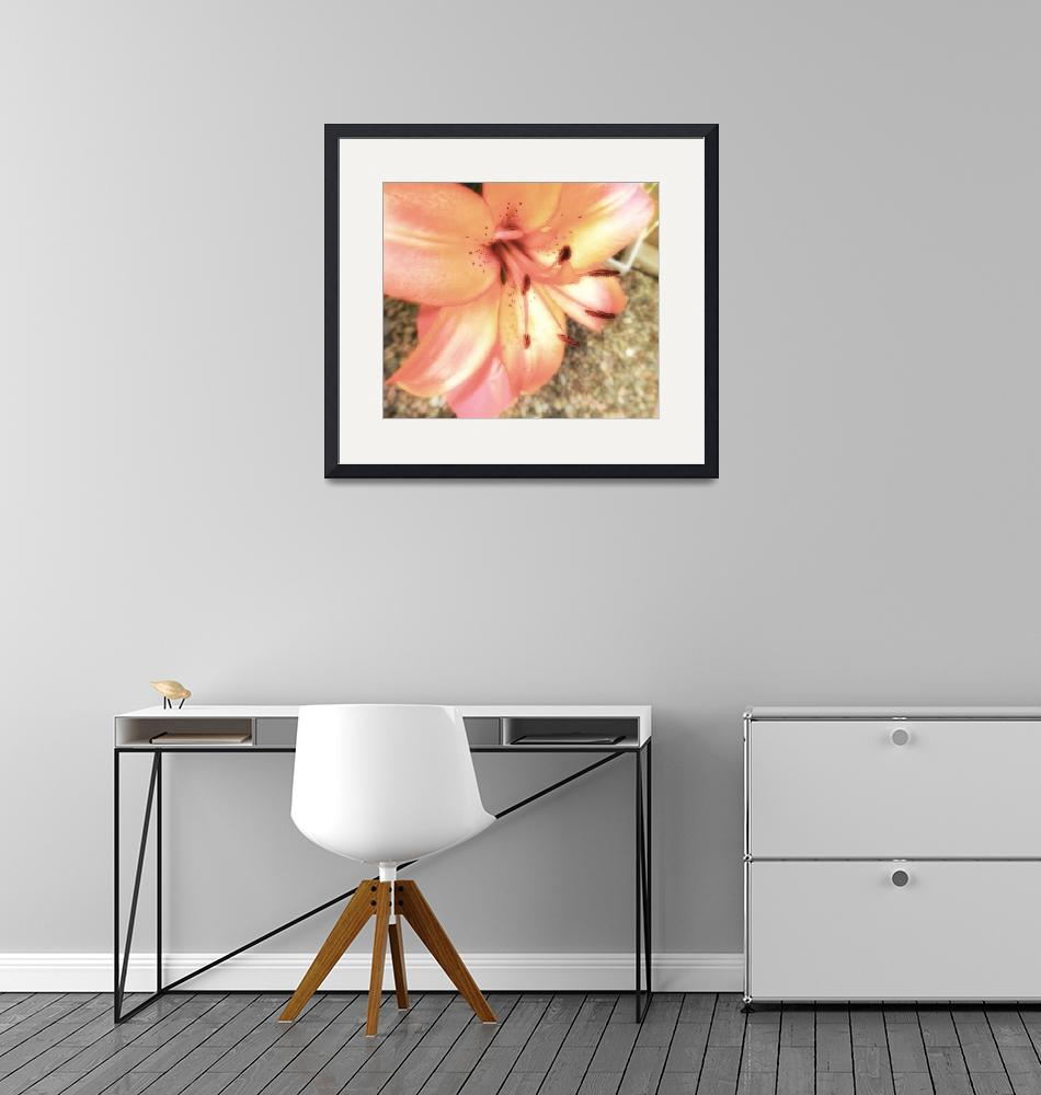 """""""soft pink lily""""  by lizmix"""