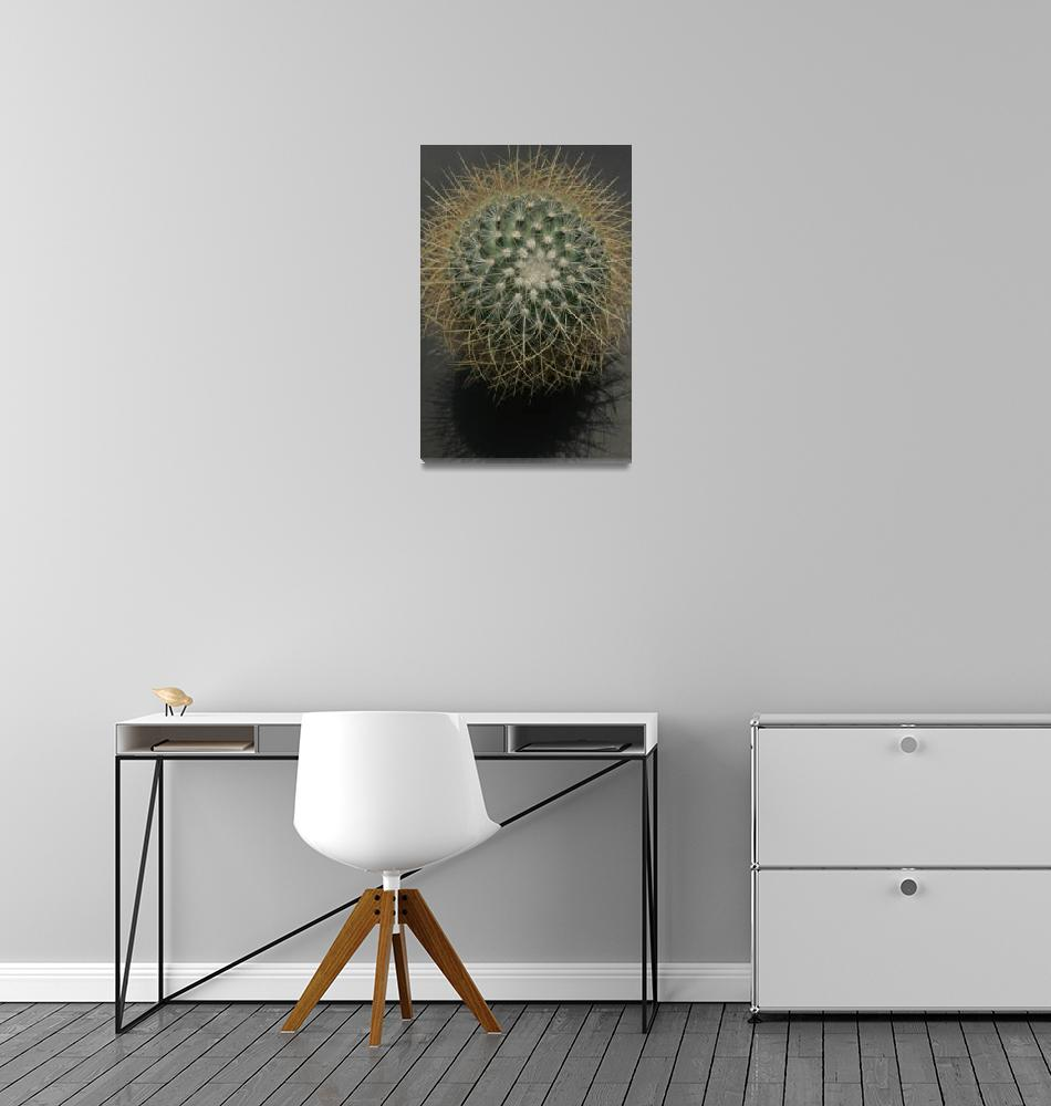 """""""Prickly Cactus with Shadow""""  (2012) by newimage"""