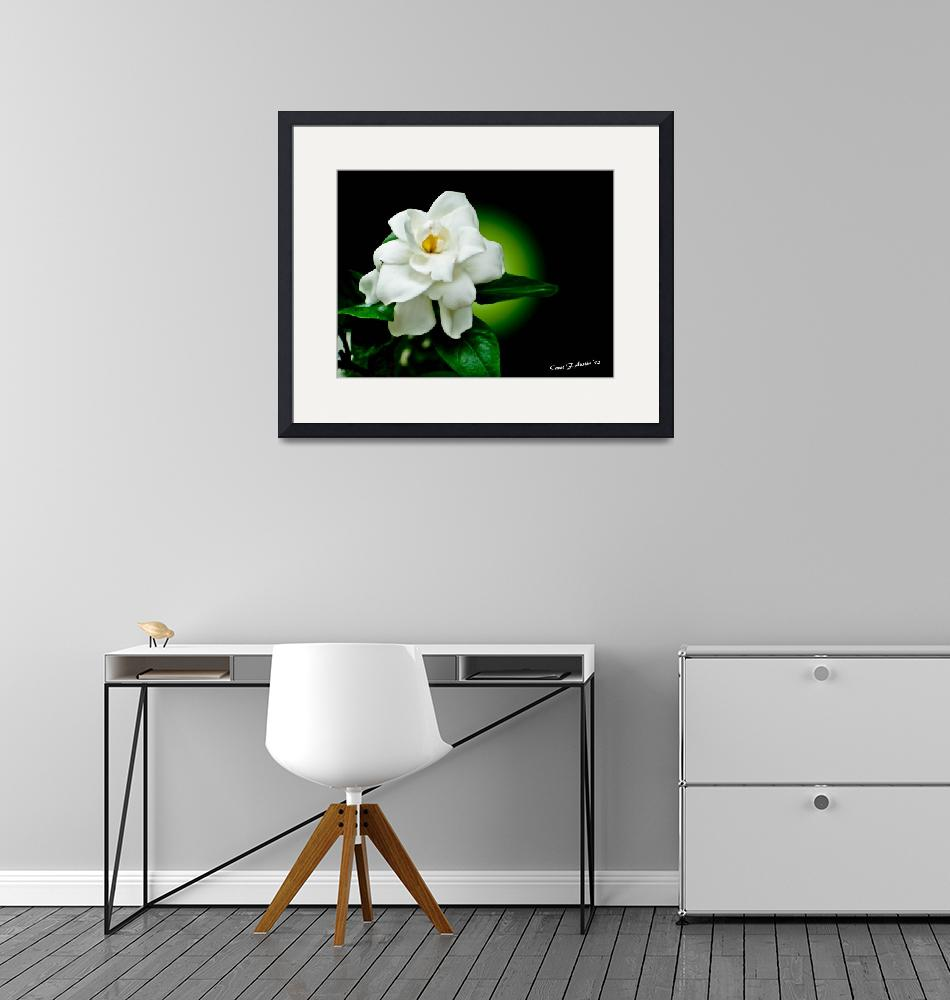 """One Sensual White Flower""  (2010) by PhotographsByCarolFAustin"