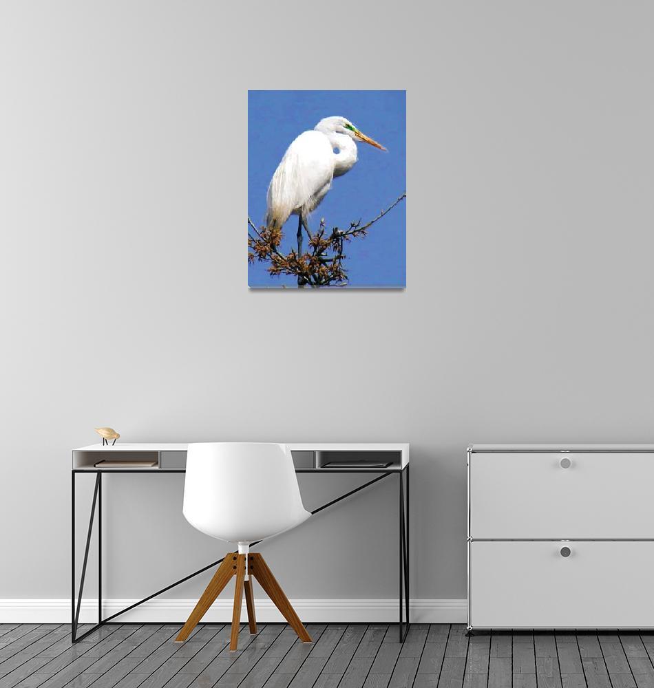 """White Heron""  (2011) by ADulaney"
