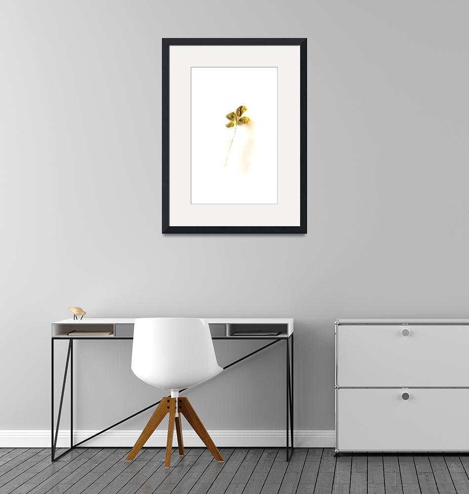 """""""Golden Four Leaf Clover""""  by Tomitheos"""