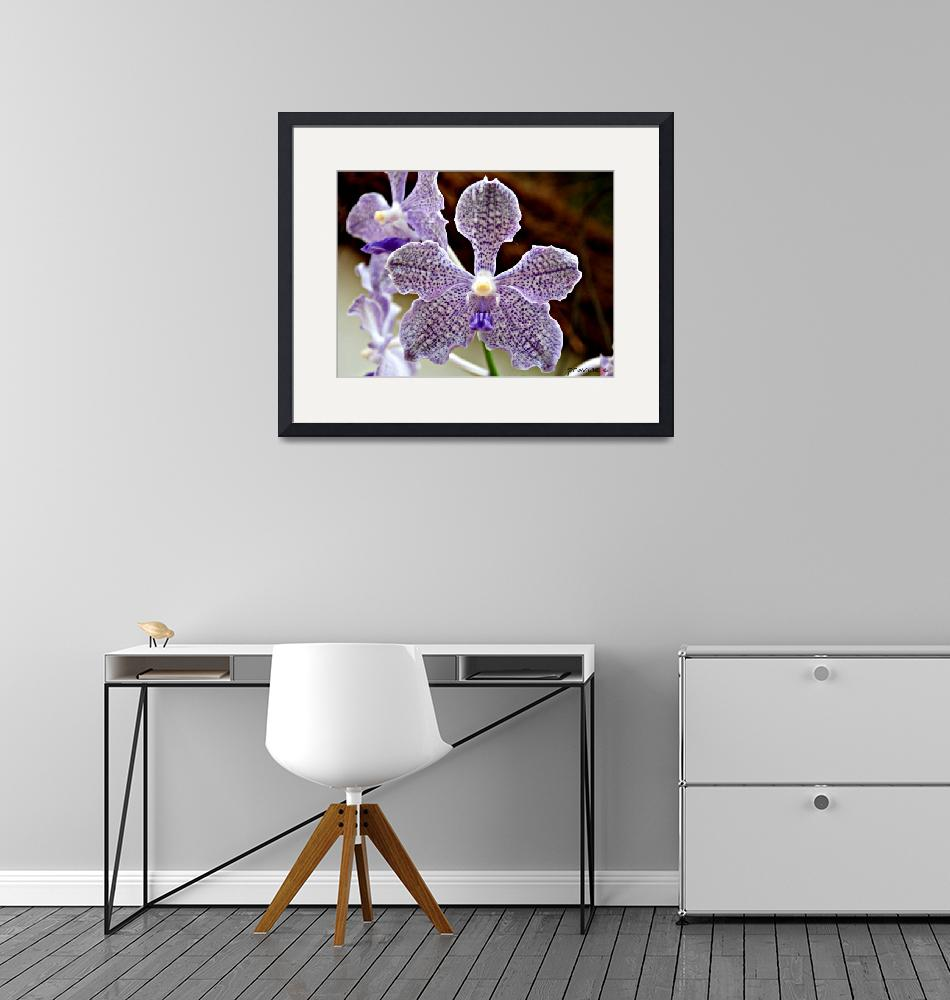 """""""Orchids""""  (2010) by pravine"""