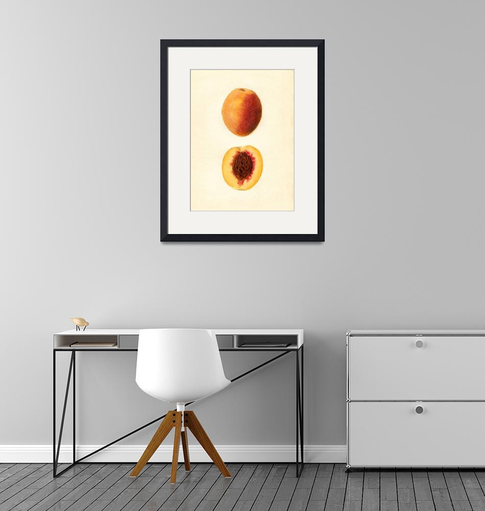 """Vintage Illustration of a Sliced Peach""  by Alleycatshirts"