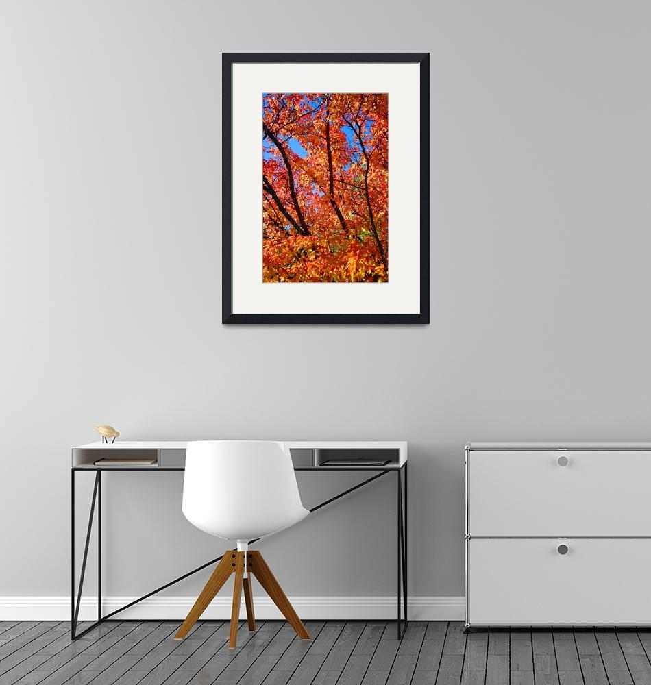 """""""Autumn Glory""""  (2011) by rsummers"""