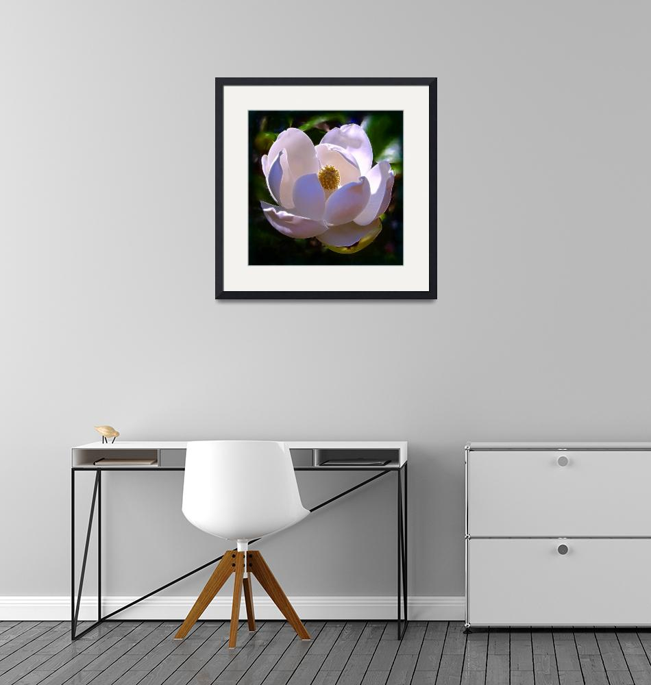 """""""Magnolia One""""  (2008) by Artlife"""