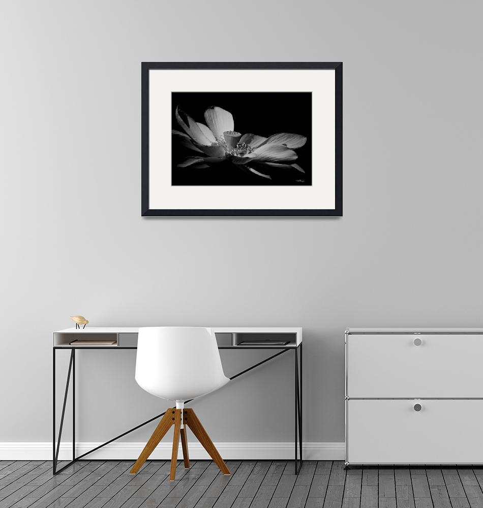 """""""Lotus In Monochrome""""  by TBurgess"""