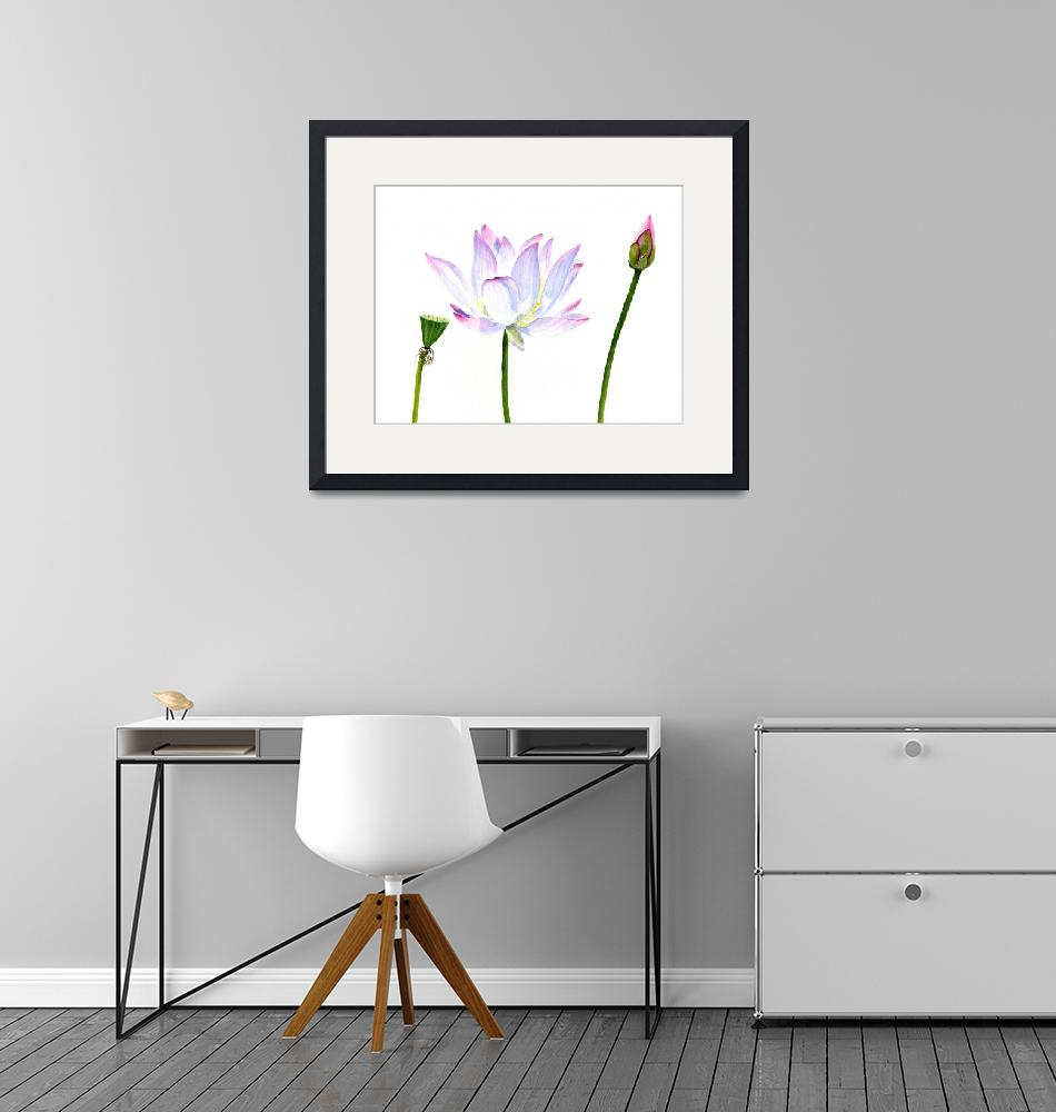 """""""White Lotus Flower with Bud and Seed Pod""""  (2015) by Pacific-NW-Watercolors"""