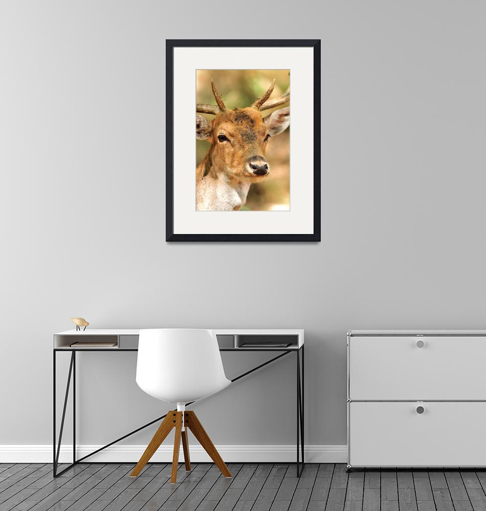 """""""Young Deer Portrait""""  (2009) by JoaoPonces"""