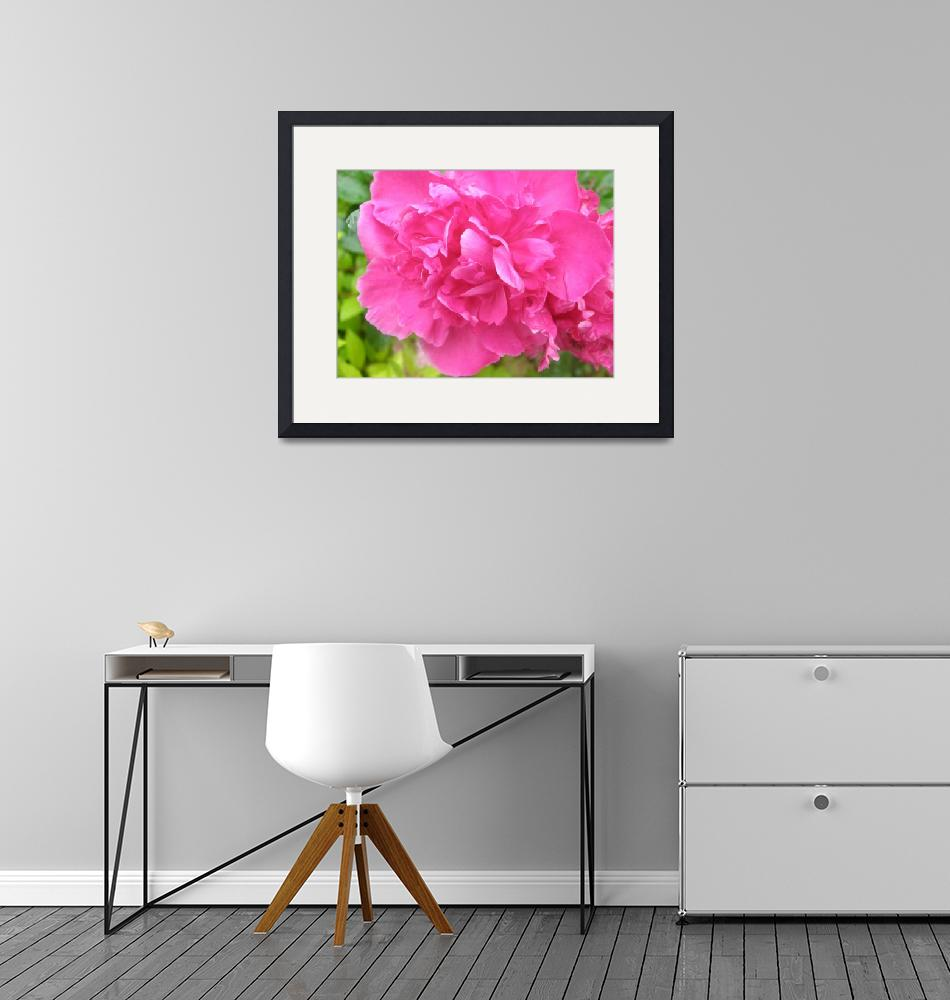 """""""Hot Pink Peony""""  (2009) by TheMears"""