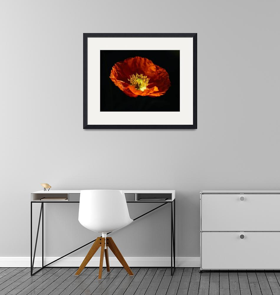 """""""Floating Poppy""""  (2016) by cwtrumpet"""