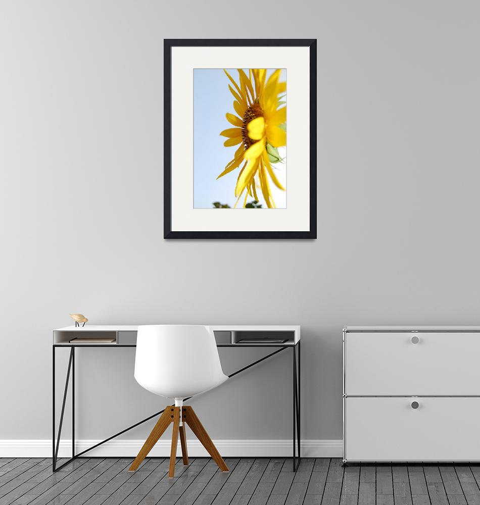 """""""Sunflower Sideview""""  (2008) by crazyabouthercats"""