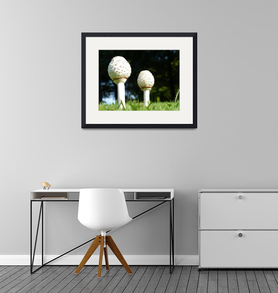 """""""Two Mushrooms""""  by lynmariephotography"""