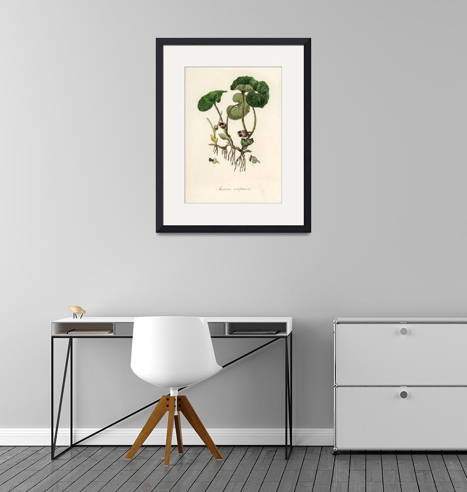 """""""Vintage Botanical European Wild Ginger"""" by FineArtClassics"""