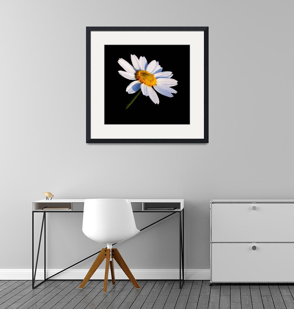 """""""Black and White Daisy3""""  by KHarrison"""