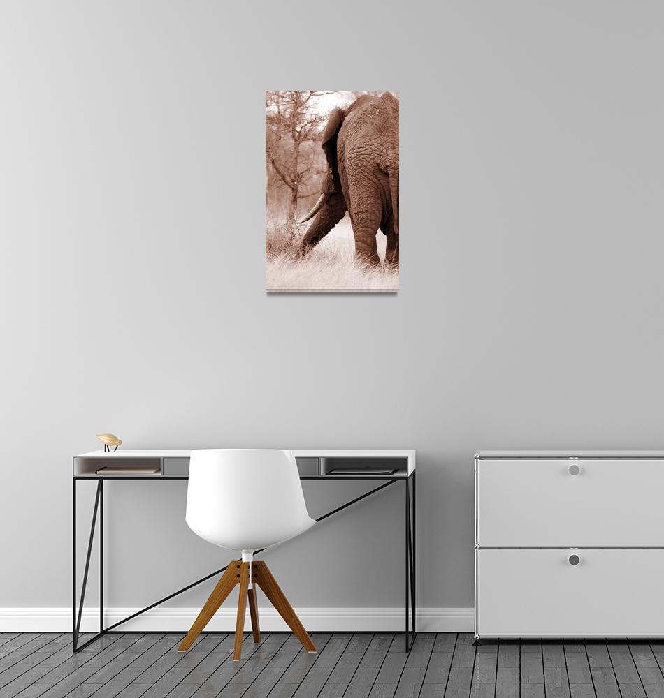 """Adult elephant""  (2010) by Permen_Mata"