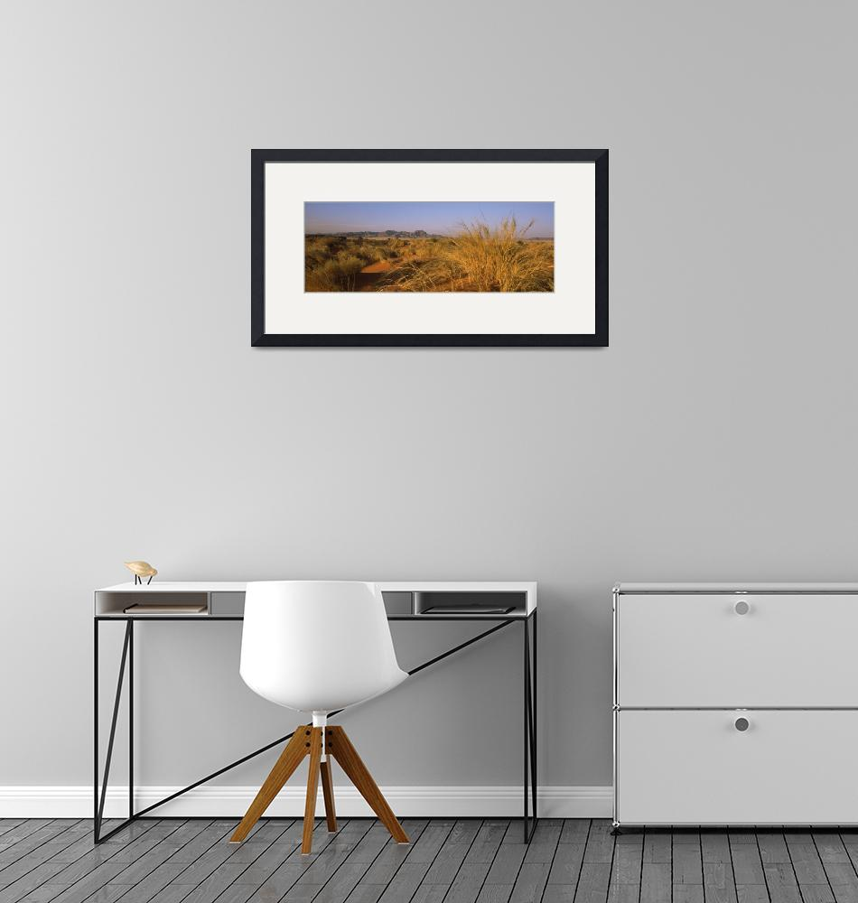 """""""Grass growing in a desert Namib Rand Nature Reser"""" by Panoramic_Images"""
