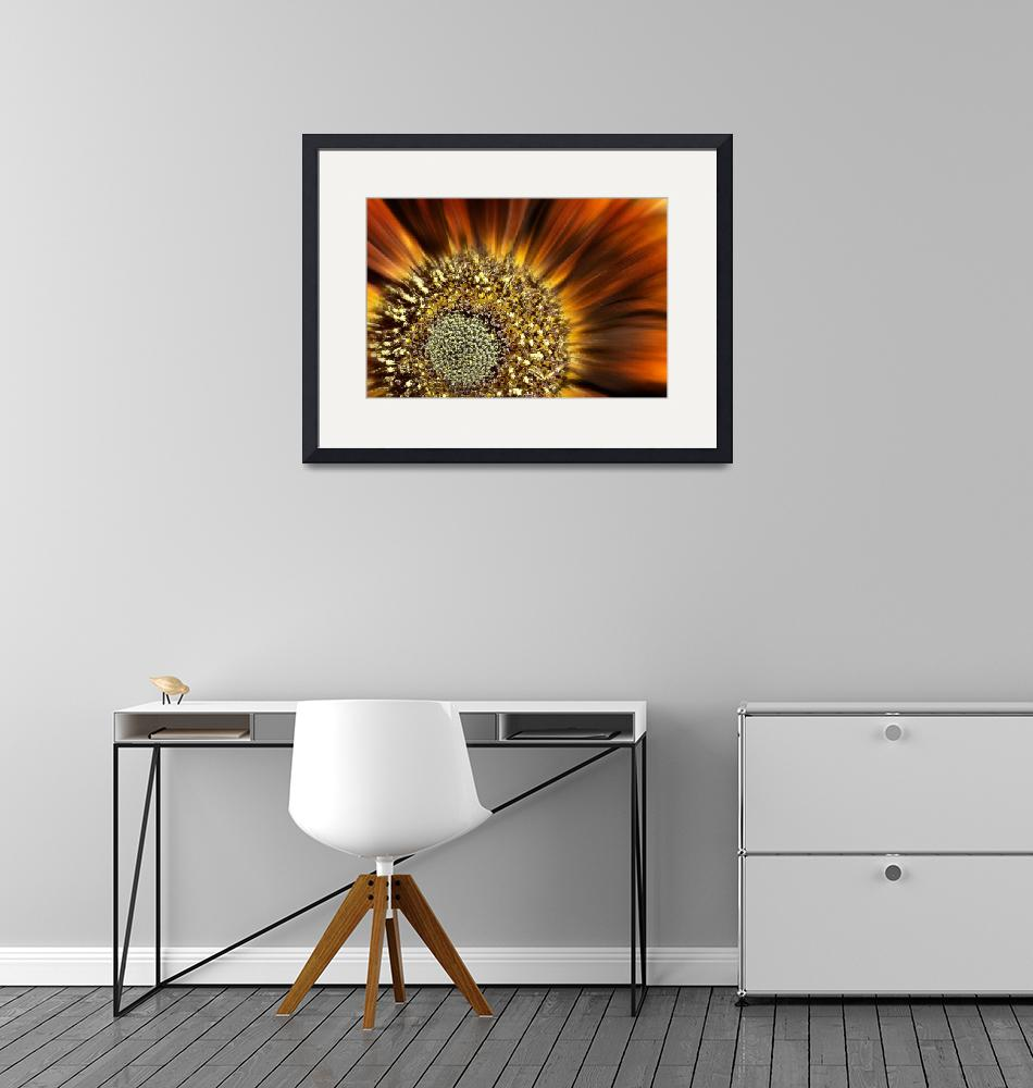 """""""The Centre of a Sunflower"""" (2009) by maxblack"""