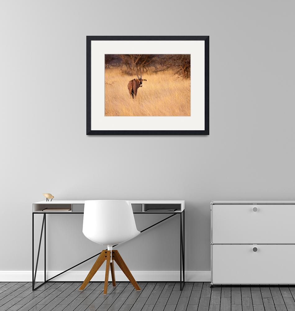 """""""East African Oryx""""  (2011) by mjphoto-graphics"""