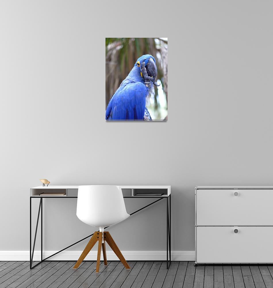 """""""Blue Parrot""""  (2007) by stockphotos"""