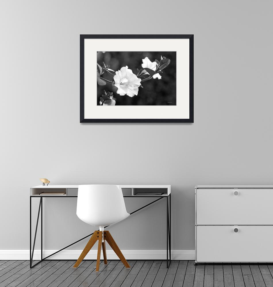 """""""Black and White Lily"""" (2009) by BillLinn"""