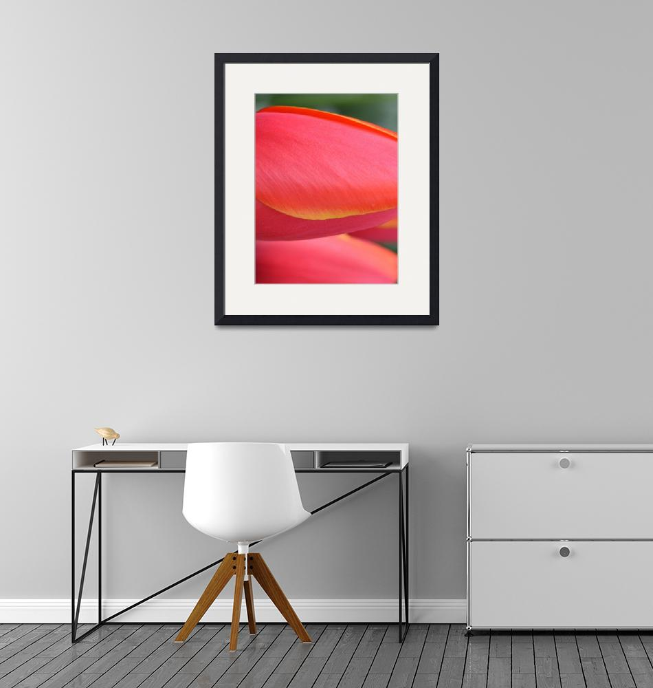 """""Pink Orange Yellow Tulip 18"" #18042315.0716 (3)""  (2015) by achimkrasenbrinkart"